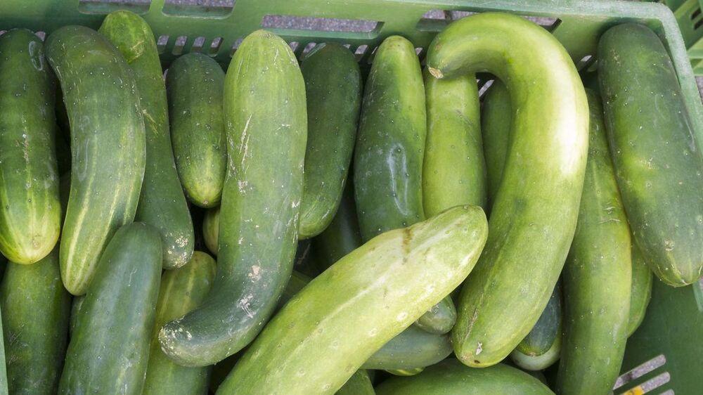 Skæve og deforme grøntsager ryger normalt ikke på hylderne i danske supermarkeder. Det vil organisationen Stop Spild af Mad lave om på.