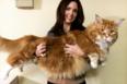 Katten Omar kan være verdens længste kat, med en længde på 1,2 meter.