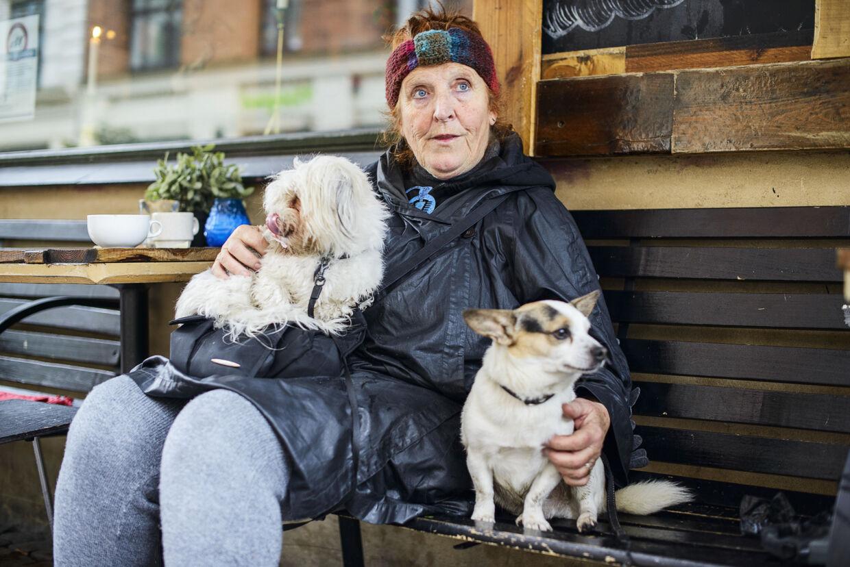 Jeff passer hundene Pippi og Boris på Blågårdsgade.