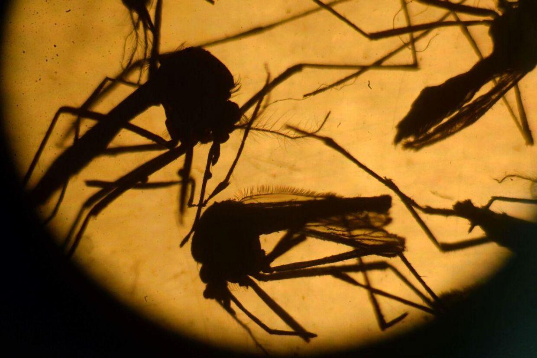 Den frygtede zika-virus får nu to forskere fra New York til at kræve OL i Rio aflyst.