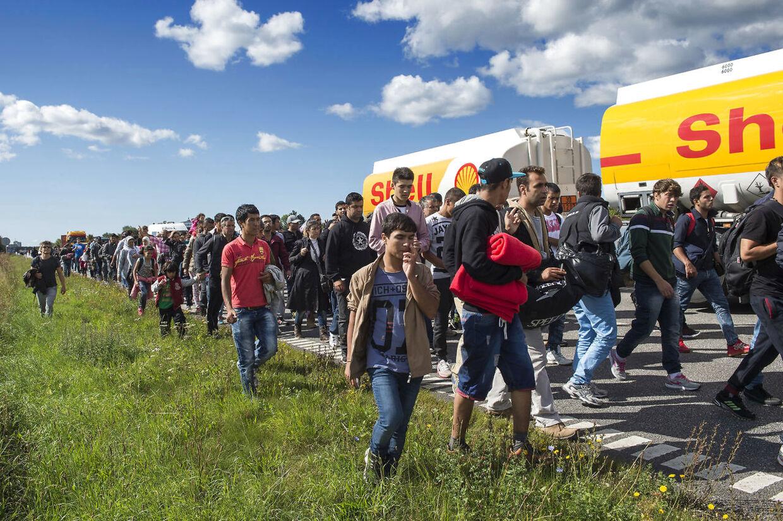 En stor gruppe flygtninge og migranter er mandag den 7. september 2015 begyndt at gå mod nord fra Rødby. (Foto: Jens Nørgaard Larsen/Scanpix 2016)