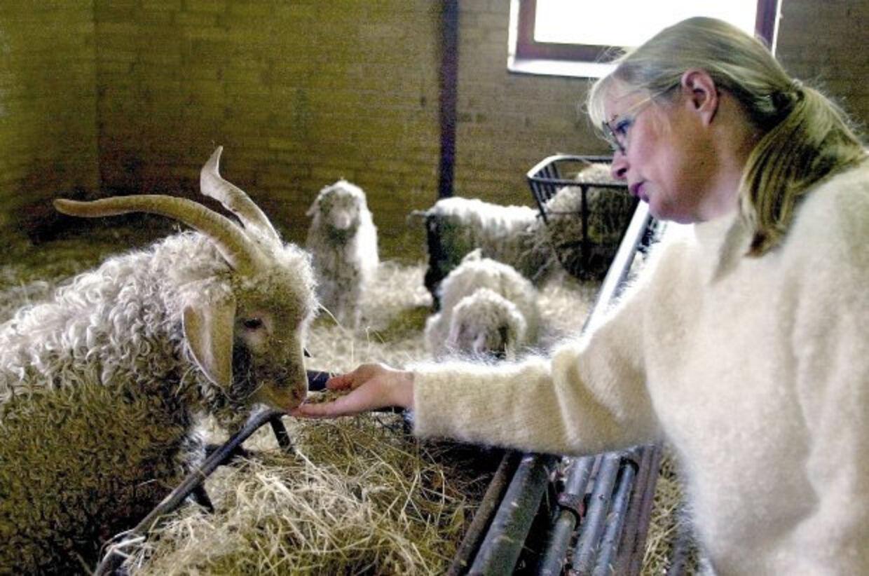 Hanne Pedersen opdrættede geder og spandt mohair-garn på ejendommen i Nr. Vium. FOTO: DELEURAN