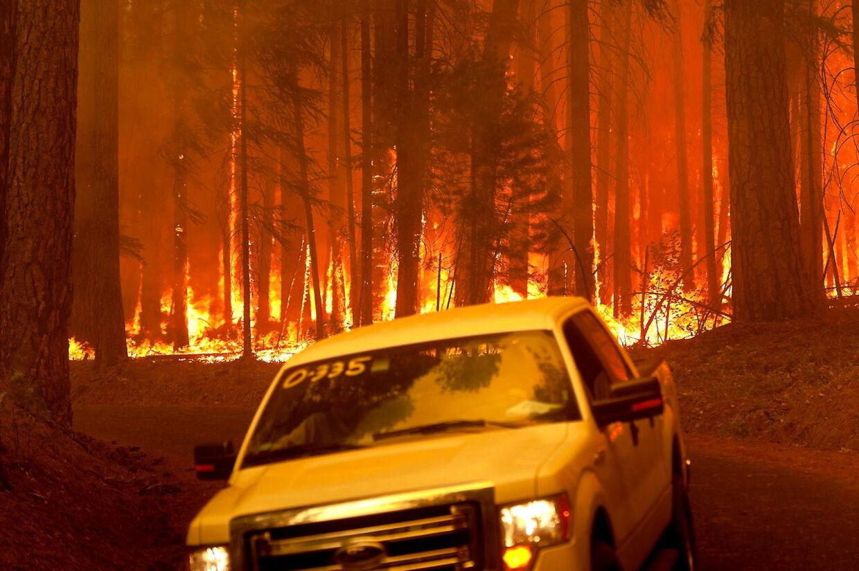 Flammer æder sig igennem træerne. 25 bygninger er udbrændt og endnu flere biler.