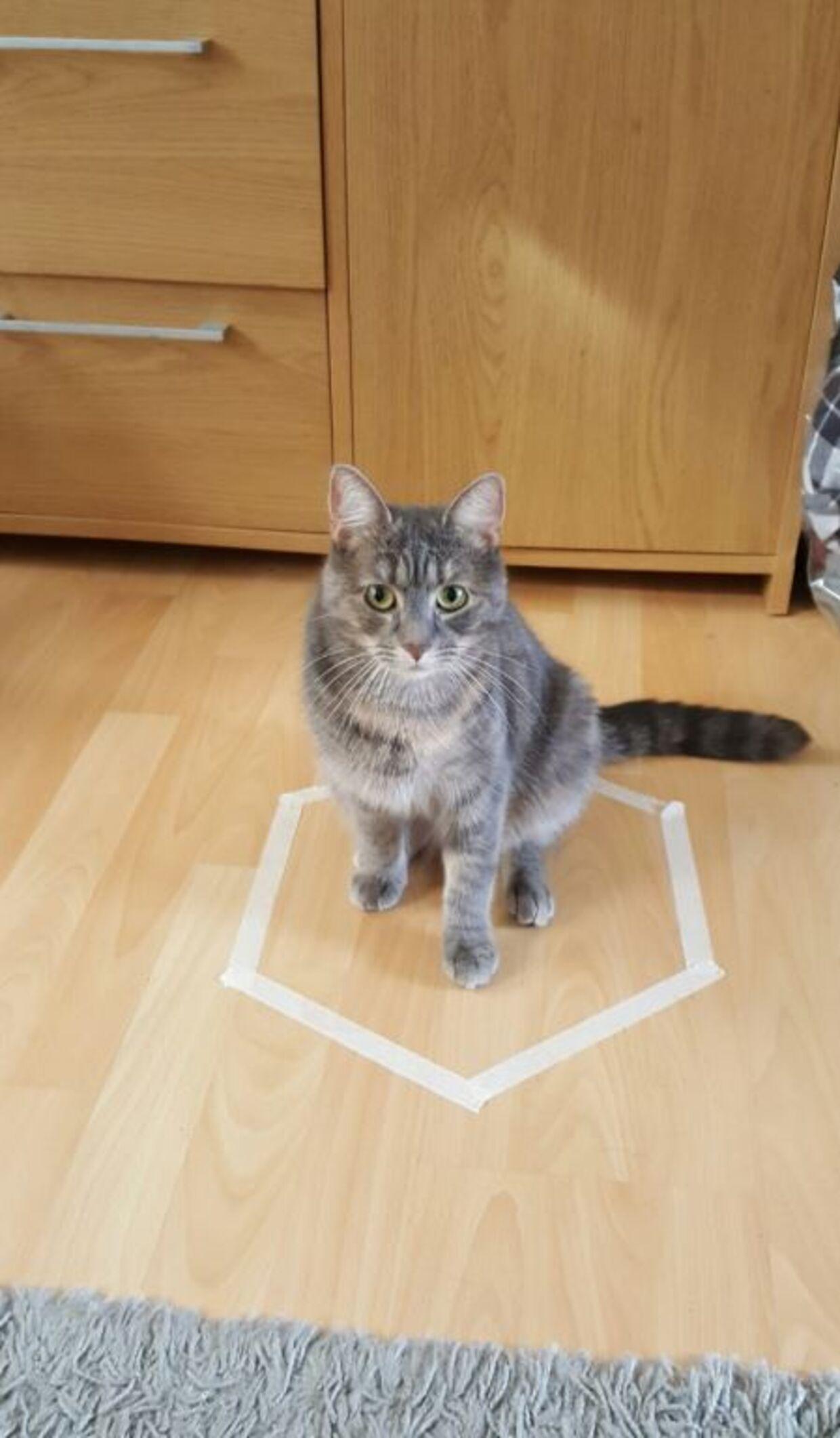 Katten Vida gik også selv ind i det afmærkede område.