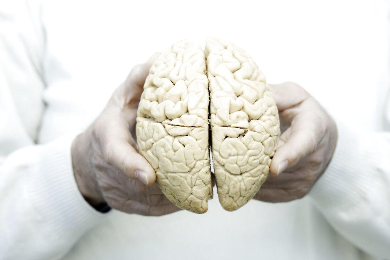 Psykolog Poul Røpke, BrainCenter i København, hjerne af kvinde lånt hos Eksperimentariet.