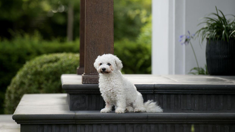 Den kongelige families lille hund havde ikke noget imod at stille op til billeder på trappen.