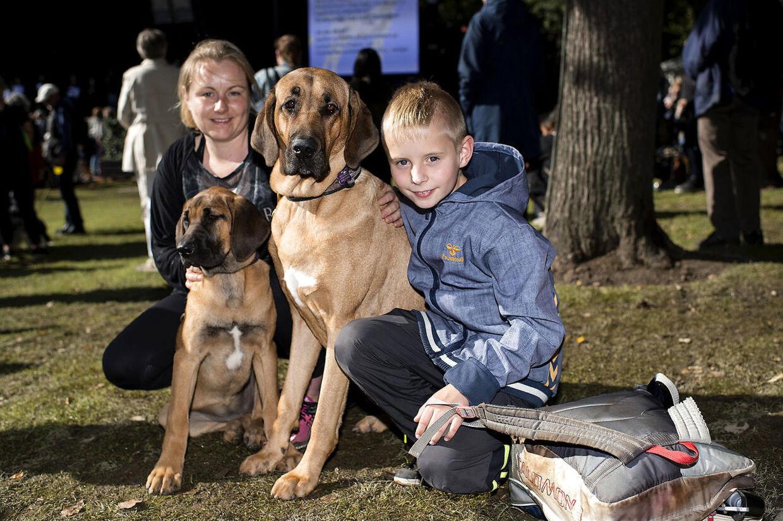 Hundens Dag i Tivoli Broholmer-hunde