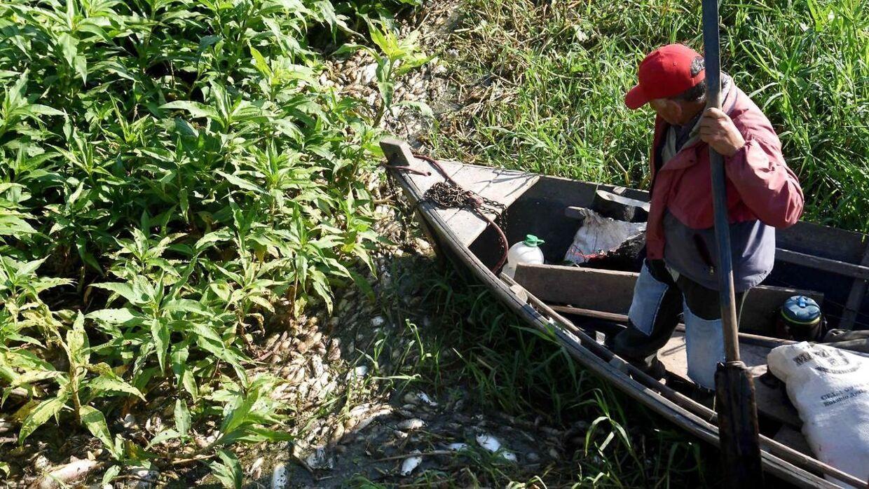 En fisker padler gennem hundredvis af døde, flydende fisk på Confuso-floden, i Villa Hayes, 30 km nord for byen Asuncion, Paraguay. Miljøministeriet undersøger mulige årsager til den store mængde døde fisk.