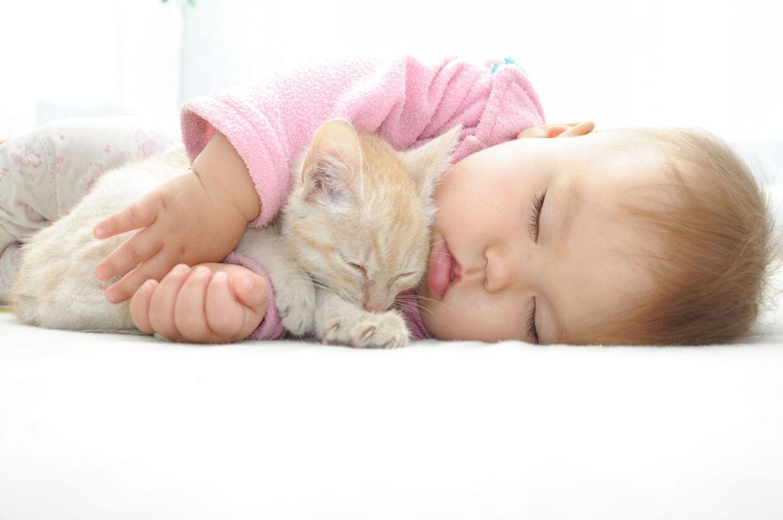 Der er dog også ting, du skal være opmærksom på. Katte kan nemlig være en ulempe på andre fronter.