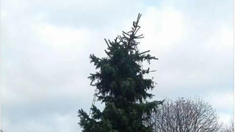 juletræ køb københavn