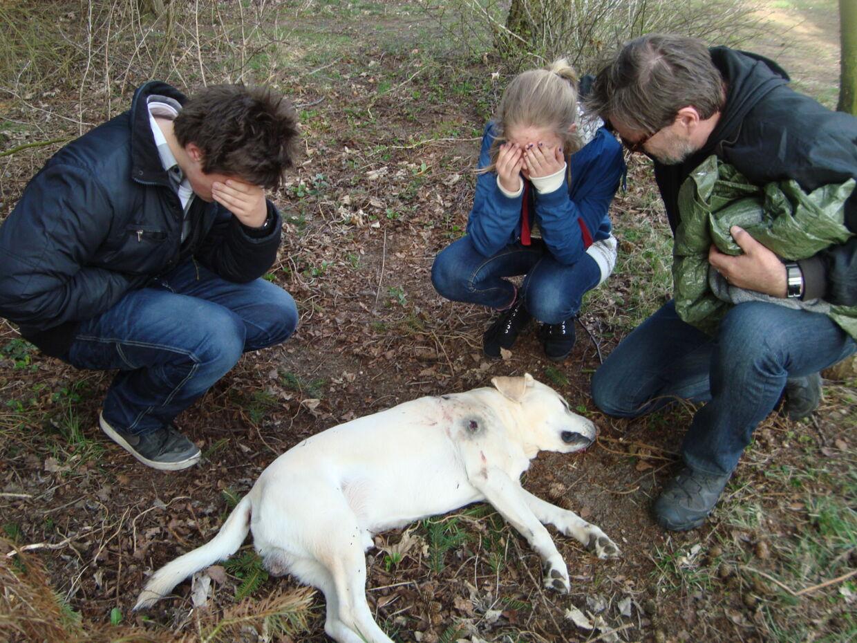 Hunden Balder blev ramt af to skud fra Johnny Pedersens haglgevær.