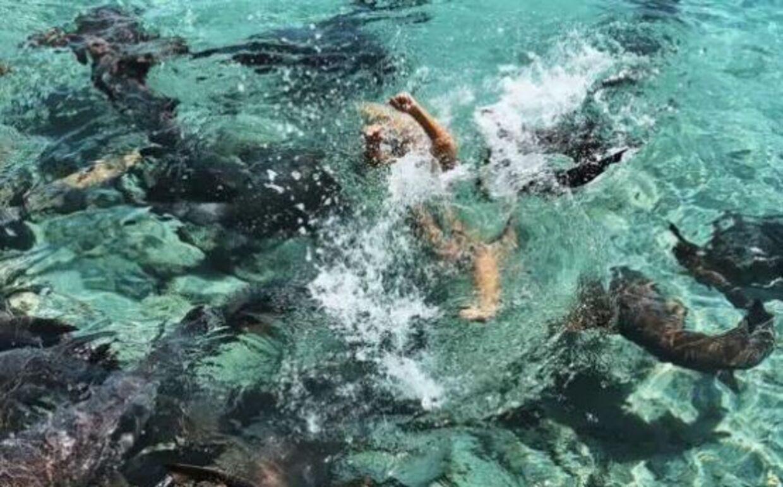 Katarina kæmpede i flere sekunder for at komme fri, da hajen trak hende ned under vandet. (Privatfoto)