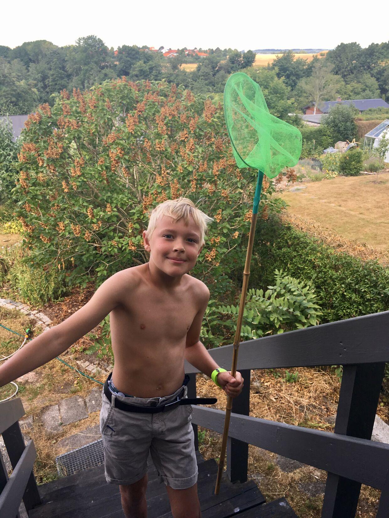 Bjarne Rasmussens søn Laurits på ni år var hurtig til at finde sit net frem, da hugormen skulle fanges.