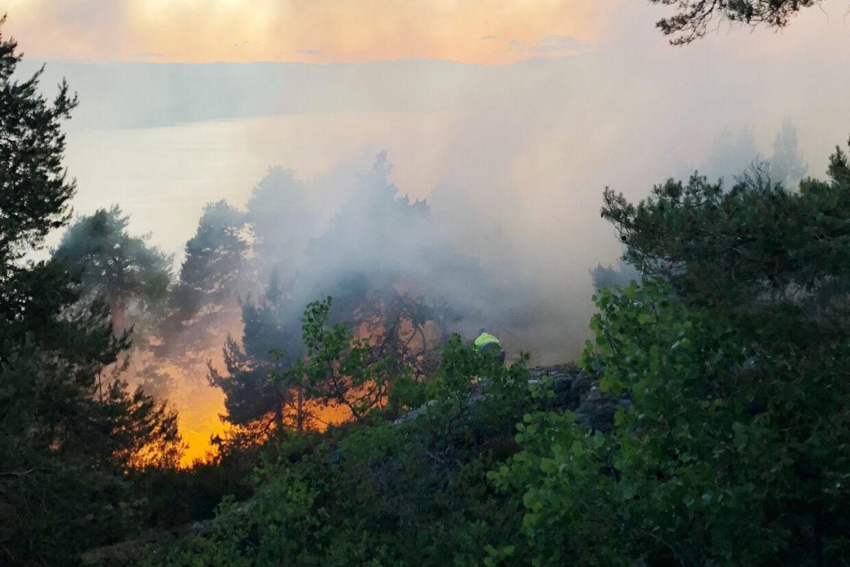 Skovbrand ved Røysåsen i Moss. Brandvæsnet melder om meget røg og udfordrende slukningsarbejde. Tor Aage Hansen/Ritzau Scanpix