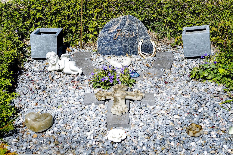 Her gravstedet i Hundested, hvor bror og søster i dag ligger begravet side om side. Den 16. november 2003 dræbte en 14-årig pige sin 18-årige bror med adskillige knivstik i deres hjem i Hundested. Drabet skete omkring klokken seks om morgenen, hvor faderen i familien vågnede ved, at der var larm fra sønnens værelse. Da han gik ind på værelset, så hans sin datter sidde på broderen, mens hun stak ham mange gange med en stor kniv. Pigen var iført en kedeldragt og en halloween-maske. Da faderen forsøgte at stoppe pigen, blev han stukket i hovedet og på armen, men slap med mindre skader. Den 14-årige pige stak af i familiens bil, og efter en længere flugt blev hun til sidst stoppet af politiet. Pigen tilstod mordet og blev indlagt på en lukket psykisk afdeling, da hun var yderst ustabil efter hændelsen.