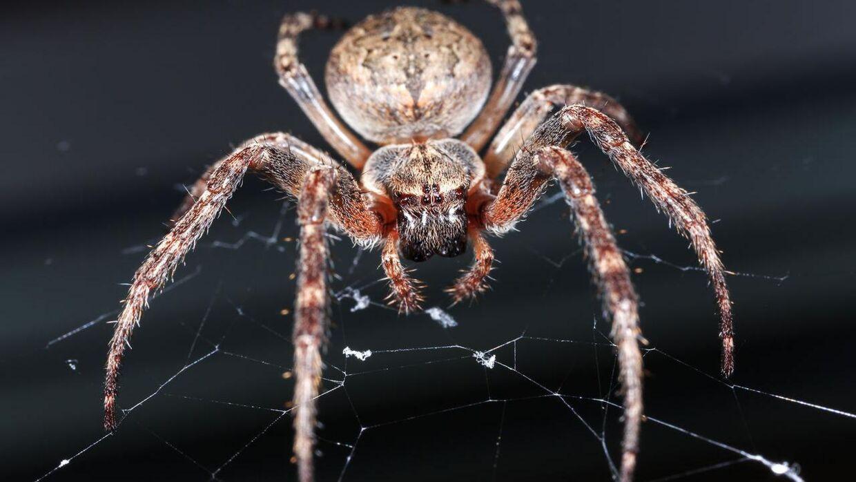 Edderkopper kan flyve under de rette betingelser. Arkivfoto: Iris