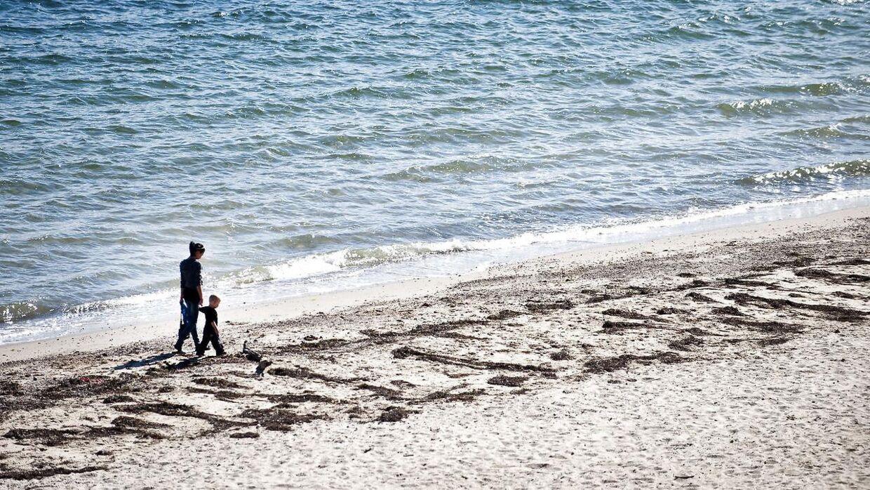 Hybenroser har invaderet danske strande. Derfor har de nu taget hårdhændede midler i brug i Aarhus Kommune