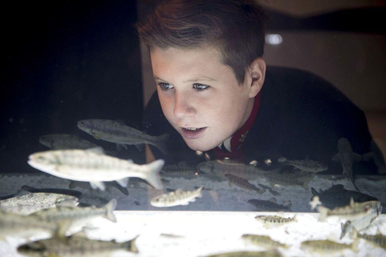 Prins Christian ser på fisk ved Bakkafrost i forbindelse med kronprinsfamiliens officielle besøg på Færøerne.