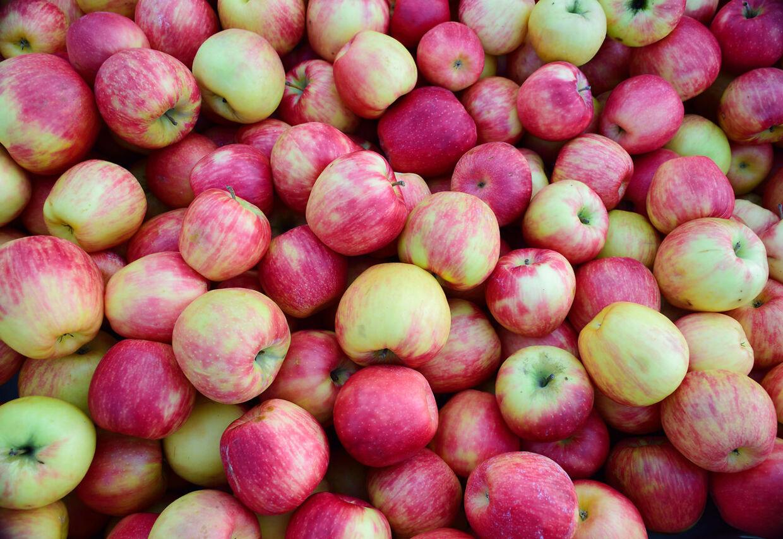 Æblet er en klassiker i frugtkurven og ungernes madpakke. Men mange af dem er sprøjtede, og derfor står æbler for en stor del af danskernes pesticidindtag (genrefoto).