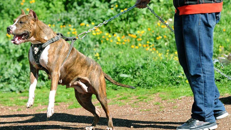 Politiet formoder, at hunden er adopteret fra en andet stat, men de ved ikke hvilken.