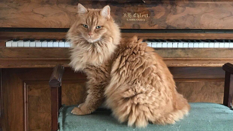 Katten Pushkin har smerter og ubehag, efter den blev ramt af haglbøsse.