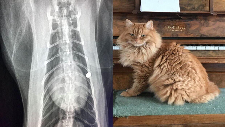 Onsdag morgen opdagede Anne Mette Barfod, at hendes kat var blevet beskudt.