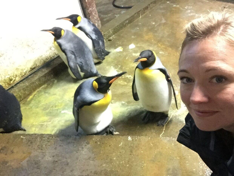 Dyrepasser Sandie Hedegård Munck har måtte bruge sine allermest kreative evner i forsøget på at genoprette roen i pingvinanlægget i Odense Zoo, hvor to homohanner har skabt stort drama efter at have kastet deres kærlighed på en unge og kidnappet den fra dens forældre.Foto: Privat