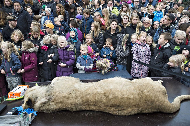 I 2015 endte Odense Zoo i en international shitstorm, da man parterede en løve foran publikum