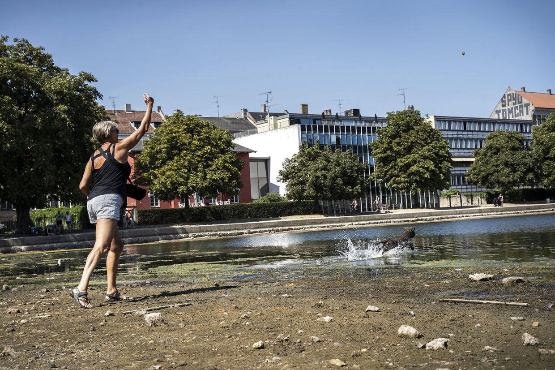 Tørke i Danmark. Søerne i København tørrede helt ud i løbet af sommeren