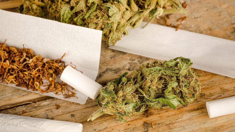 Center for Rusmiddelforskning estimerer, at mange flere danskere ryger cannabis, end Sundhedsstyrelsen oplyser. Hele fire gange så mange.