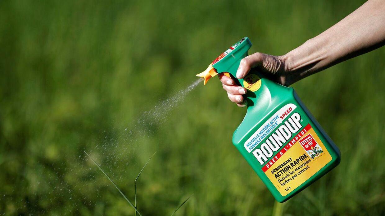 Roundup som almindeligt produkt er snart forbudt REUTERS/Benoit Tessier/File Photo