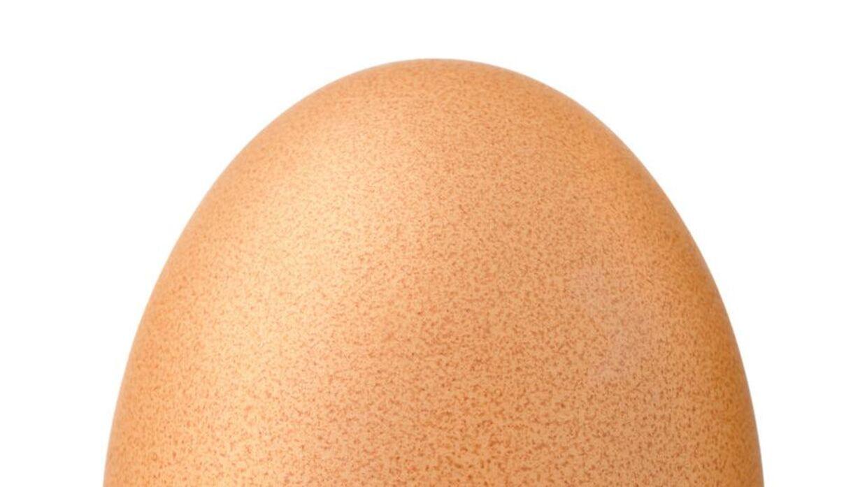 MODELFOTO af et æg.