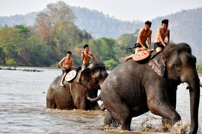 Elefanternes mahoutter rider deres dyr.