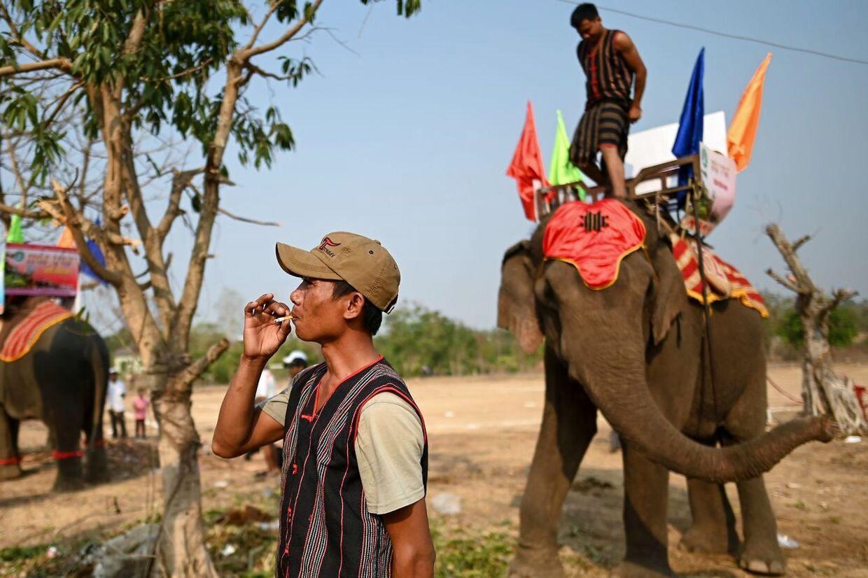 Mahoutterne er ved at gøre deres elefanter klar.