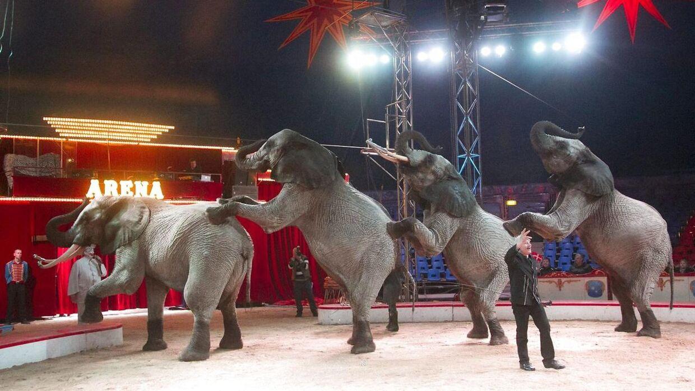 Cirkus Arenas elefant Tonga fyldte 27 år mandag 15. april 2013, dagen blev fejret med kæmpekage til fødselaren og byens børn var inviteret til at overvære festlighederne