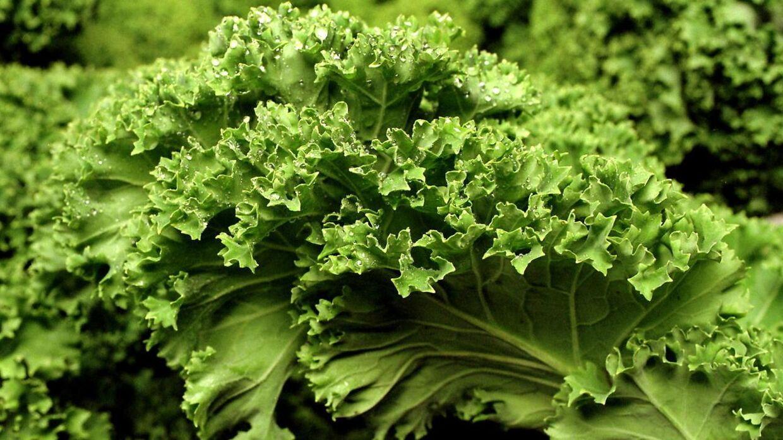Listeria er fundet i Flensted grønkål. Derfor tilbagekaldes flere varer med sidste anvendelse omkring 1. maj.