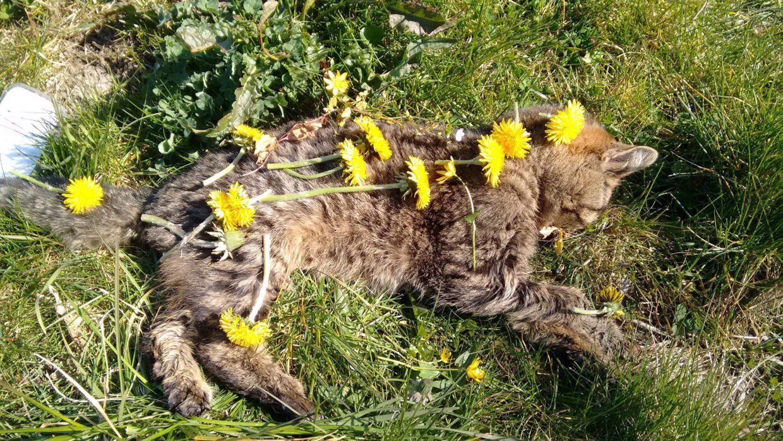 Den mishandlede kat. Foto: Privat.