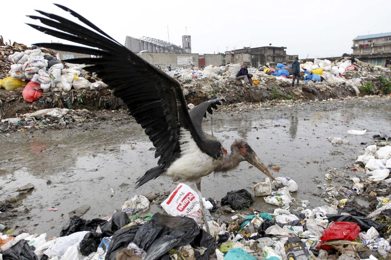 En etbenet stork på en losseplads i udkanten af Nairobi, hvor en større miljøoperation med fjernelse af affaldsdynger fra floderne har ført til uhyggelige fund af en række lig - de fleste babyer og børn. (Arkivfoto). Thomas Mukoya/Reuters