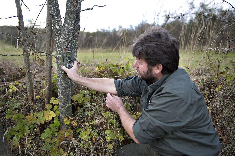 I Nationalpark Thy satte vildtkonsulent Tommy Hansen i 2012 fotofælder op, der skulle kunne afsløre, om ulve var vendt tilbage til Danmark efter 199 år.