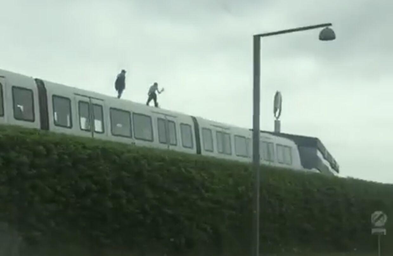 Billederne er taget langs metrostrækningen ved Ørestad Boulevard. Foto: Mathias Øgendal