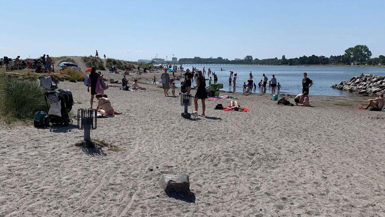 Amager Strandpark, onsdag den 24. juli 2019. Foto: Amanda Mortensen.