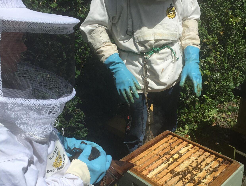 De to søskende besøgte en biavler for at lære om bestøvning, bier og frø. Privatfoto