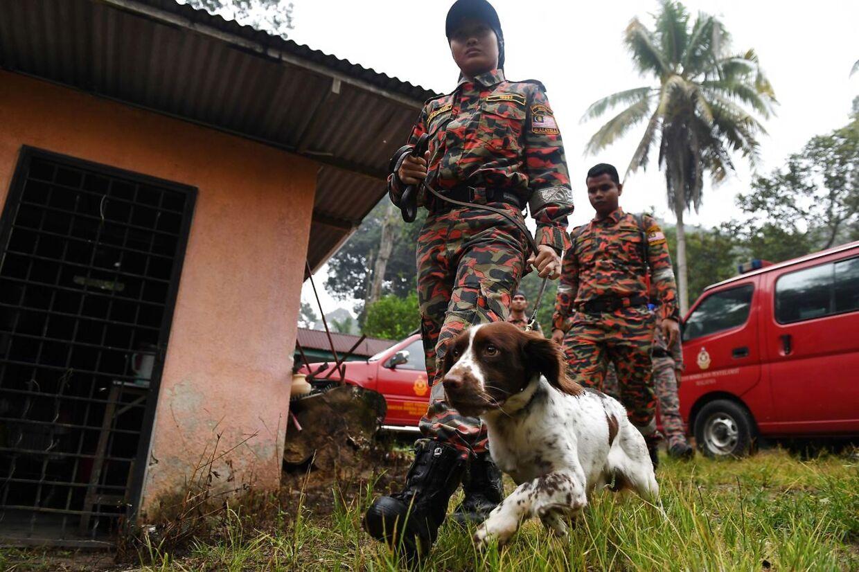 Politiet bruger både sporhunde og såkaldte lighunde i eftersøgningen.