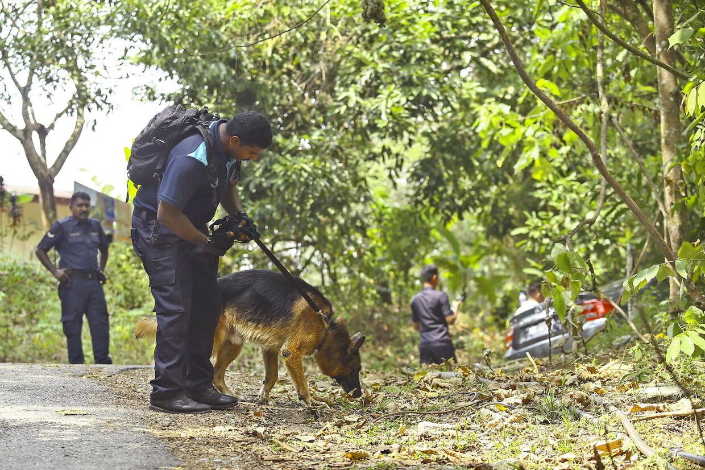 Både sporhunde og lighunde deltager i eftersøgningen af Nora.
