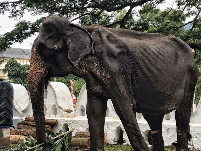 De synlige ribben på elefanten vækker bekymring på internettet, efter et opslag med billeder af den er blevet delt.