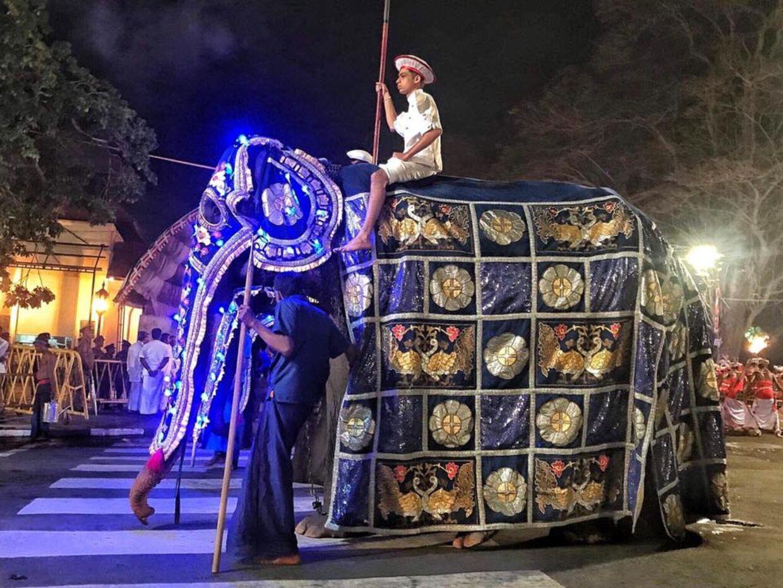 Elefanten skal sammen med 60 andre udklædes og bruges i festivalen Perahera Festival i Sri Lanka.