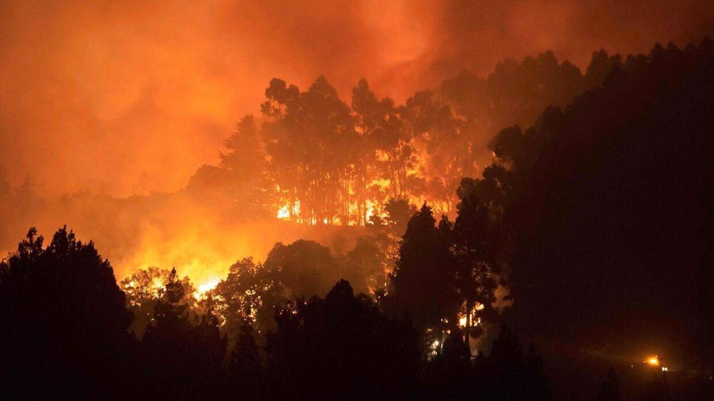 Skovbrande raserer Gran Canaria. (Foto: Desiree Martin/AFP)