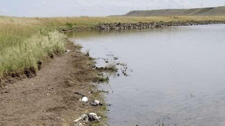 Tusindvis af fugle ligger døde på jorden efter voldsom haglstorm i Montana, USA.