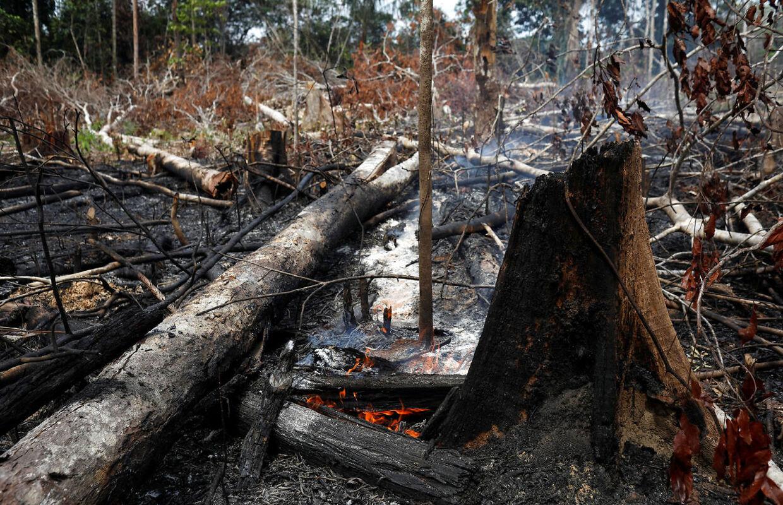 Store områder står afsvedne tilbage efter ildens rasen.