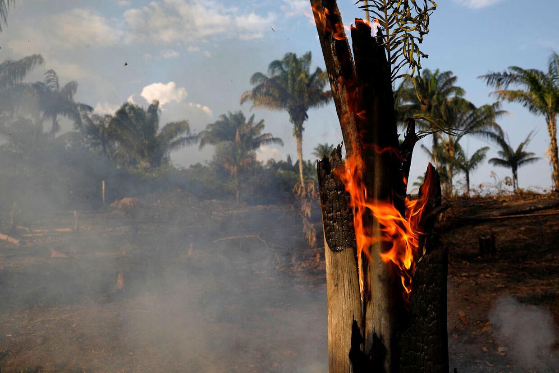 Alene den seneste uge er der registreret 9500 skovbrande i Amazonas.
